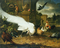 Melchior d'Hondecoeter The white peacock