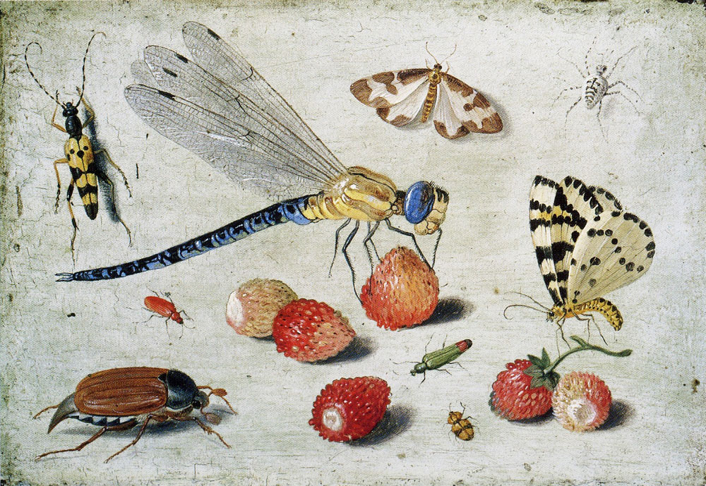 van Kessel the Elder - Study of Insects, Butterflies and Flowers