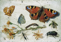 Jan van Kessel the Elder - Study of Insects, Butterflies and Flowers
