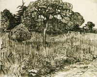 Vincent van Gogh Weeping Tree on a Lawn