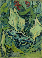 Vincent van Gogh Giant Peacock Moth