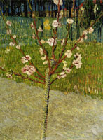 Vincent van Gogh Almond Tree in Blossom