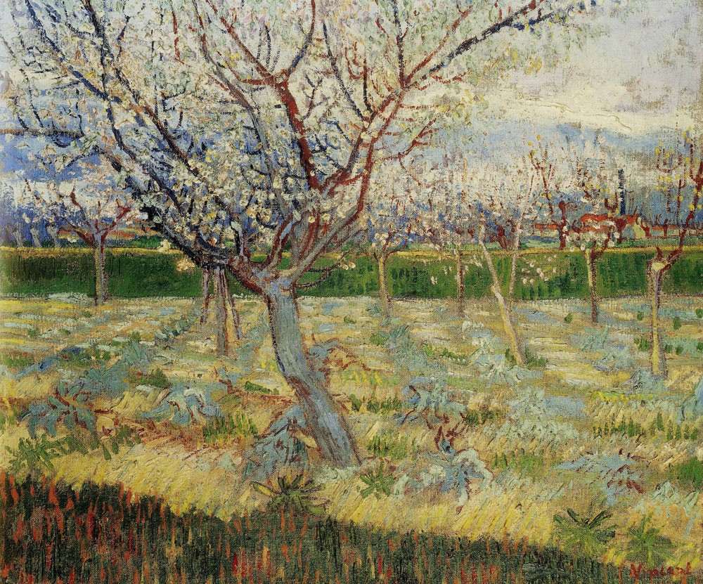 Vincent van Gogh - Apricot Trees in Blossom