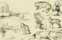 Albrecht Dürer Sketches of Animals and Landscapes
