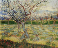 Vincent van Gogh Apricot Trees in Blossom