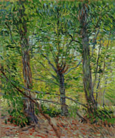 Vincent van Gogh Trees and Undergrowth