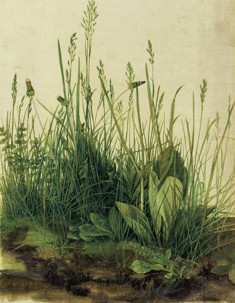 Albrecht Dürer - Great Piece of Turf