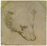 Leonardo da Vinci Study of a Bear's Head