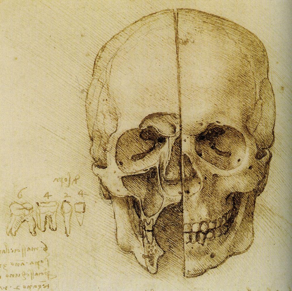 Leonardo da Vinci - Anatomical Study of the Human Skull in Sagittal ...