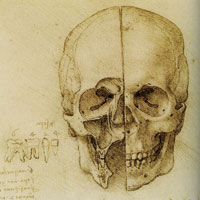 Leonardo da Vinci Anatomical Study of the Human Skull in Sagittal Section