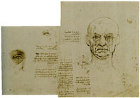 Leonardo da Vinci Proportional Study of the Eye and the Face