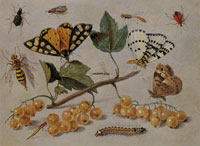 Jan van Kessel the Elder - Study of Butterflies and Insects