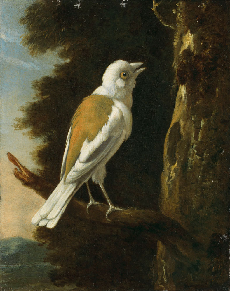 Attributed to Melchior d'Hondecoeter - A study of a helmetshrike on a branch